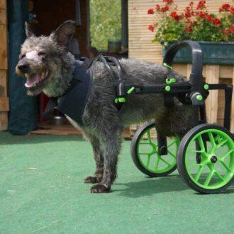vozík pro psa, ochrnutý pes, zelení doplňky, vozík anyonego