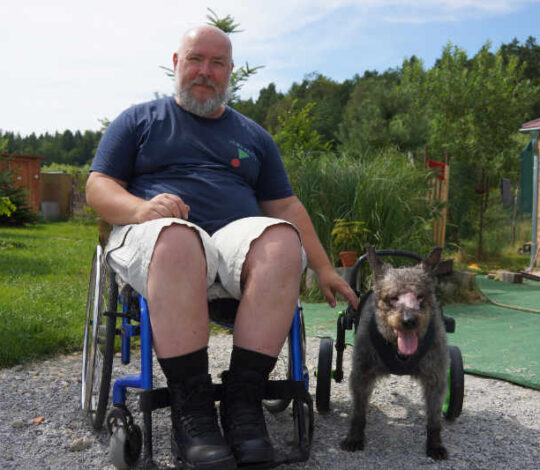 handicapped dog, wheelchair for dog, dog in anyonego wheelchair
