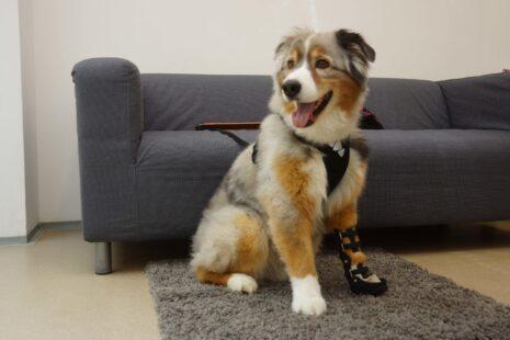 ortéza pro psa, psí ortéza, psí ortéza pro přední zápěstí