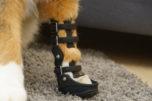 psí ortéza, psí ortéza pro přední zápěstí, ortéza z 3D tiskárny