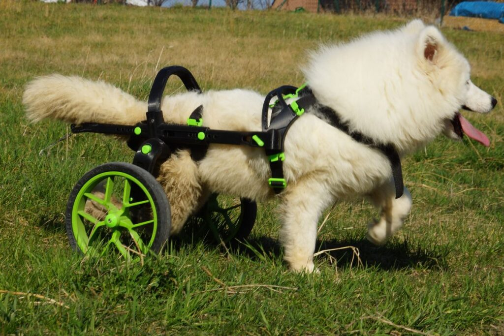 trolley for dogs, dog wheelachir in green, handicapped dog
