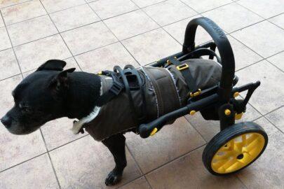 invalidní vozík pro psy, žluté doplňky