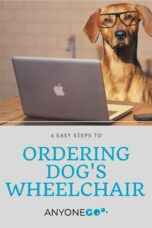 anyonego, how to order