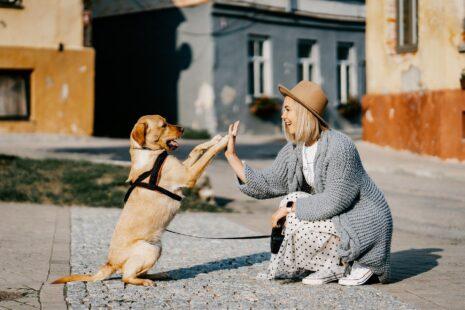 pes, spolupráce, anyonego