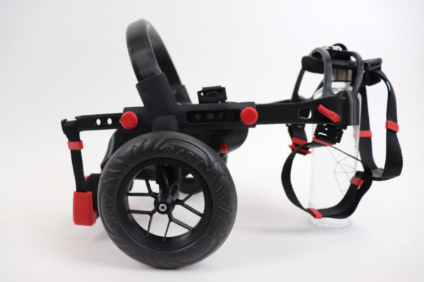 micro size dog wheelchair, dog in anyonego wheelchair
